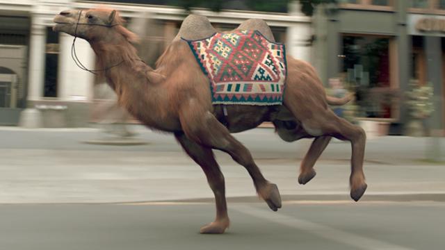 VW Camelrace